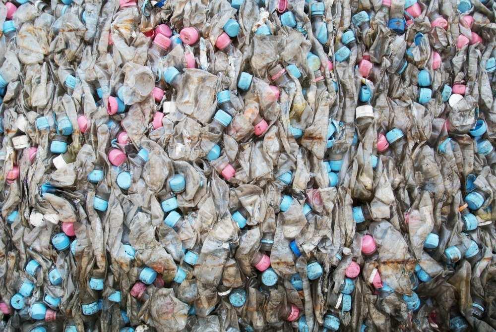 La bactérie mangeuse de plastique qui pourrait sauver la planète